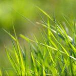 Posijte travu i uživajte u prekrasnom travnjaku